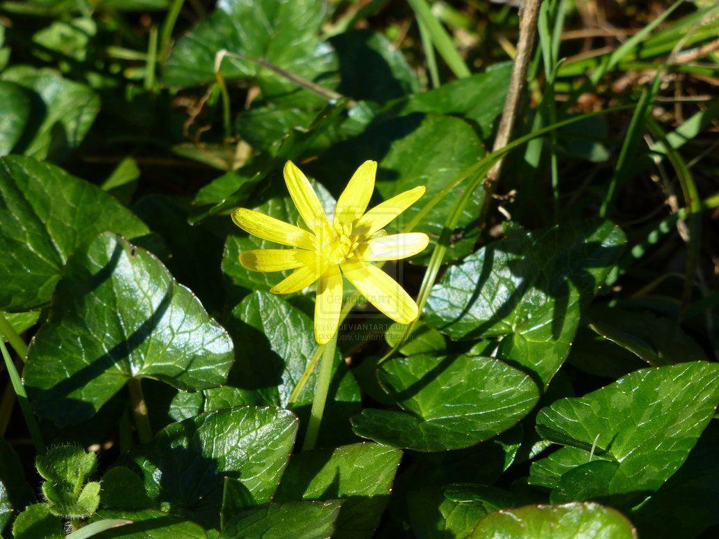 Yellow Flower Fleur Jaune By Pixizone Fleurs Jaune