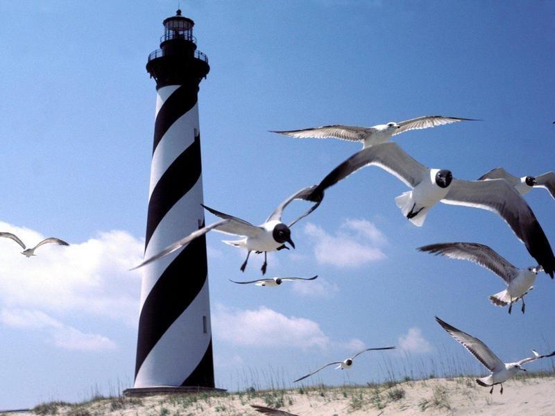 Cape Hatteras Lighthouse, North Carolina (Black-headed Gulls)