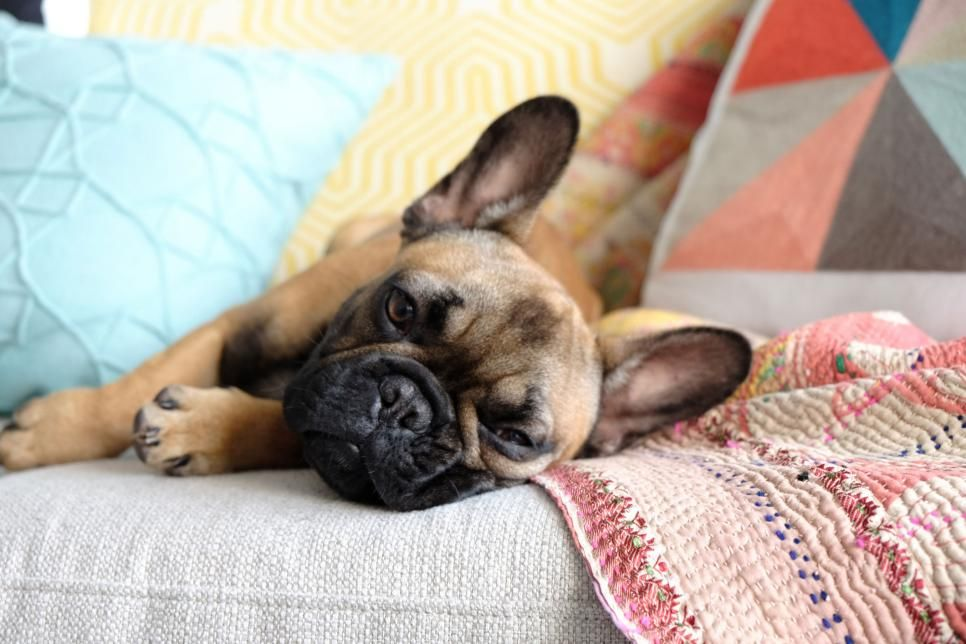 Cute Puppy Pictures In Honor Of National Puppy Day Hgtv Best