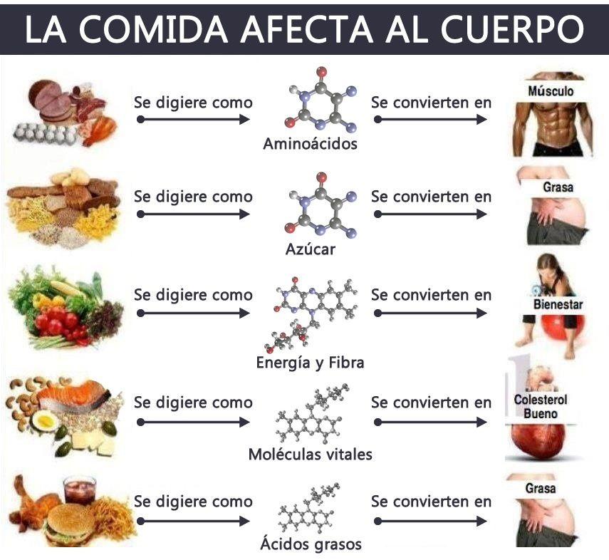 Lista de alimentos con prote nas y grasas infografia salud pinterest lista de - Alimentos con probioticos y prebioticos ...