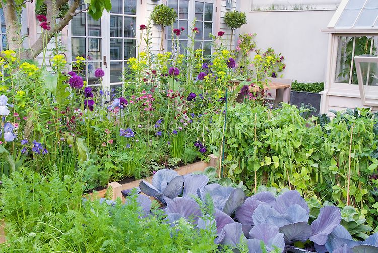 Beautiful vegetable and flower garden vegetables carrots peas cabbages flowers ireises Flowers to plant in vegetable garden