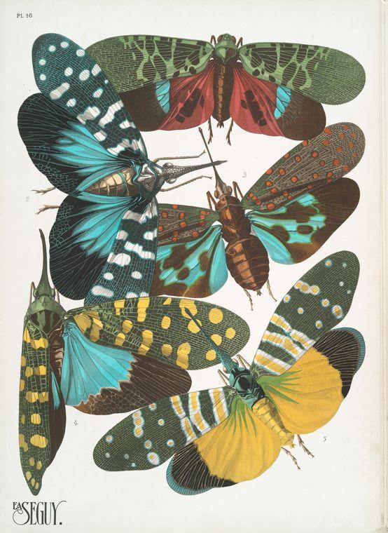 Insectes: vingt planches en phototypie coloriée...(1928) Illustrations by E A Seguy  (New York Public Library digital collections)