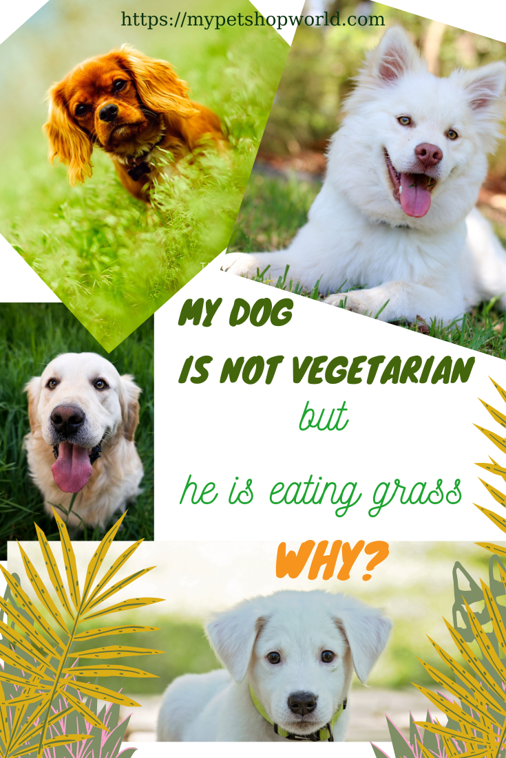 Why Is My Dog Eating Grass Is My Dog Seriously Sick In 2020 Dogs Eating Grass Dogs Dog Nipping