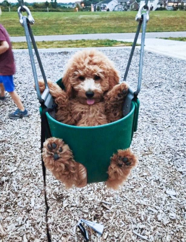 12 Dogs in Swings | Swinging Into The Weekend- DIY