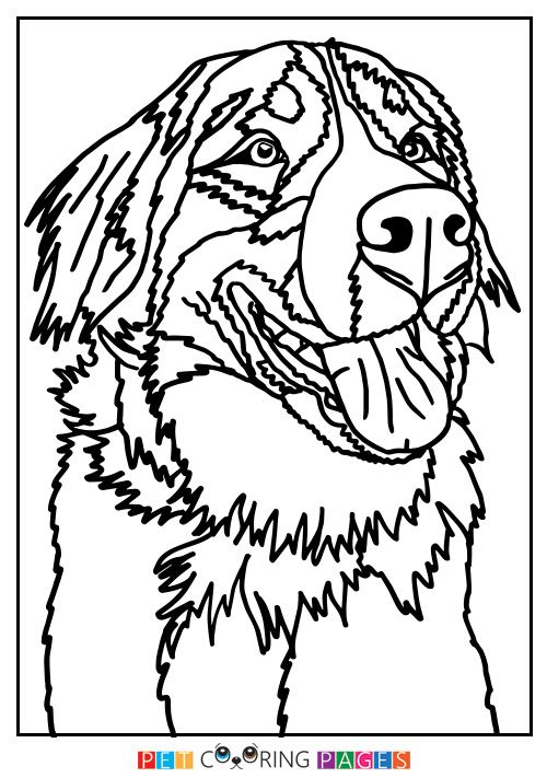 Bernese Mountain Dog Coloring Page | Crafts | Pinterest | Bernese .