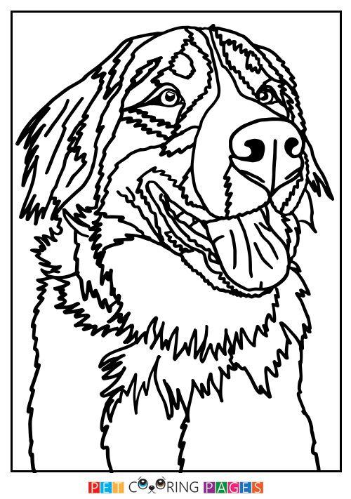 Bernese Mountain Dog Coloring Page Bernadette Bernese Mountain