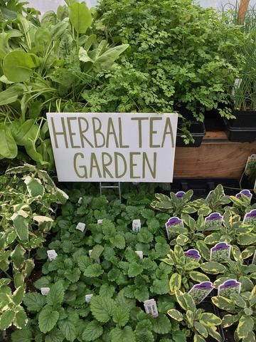 7 herbs to grow this summer