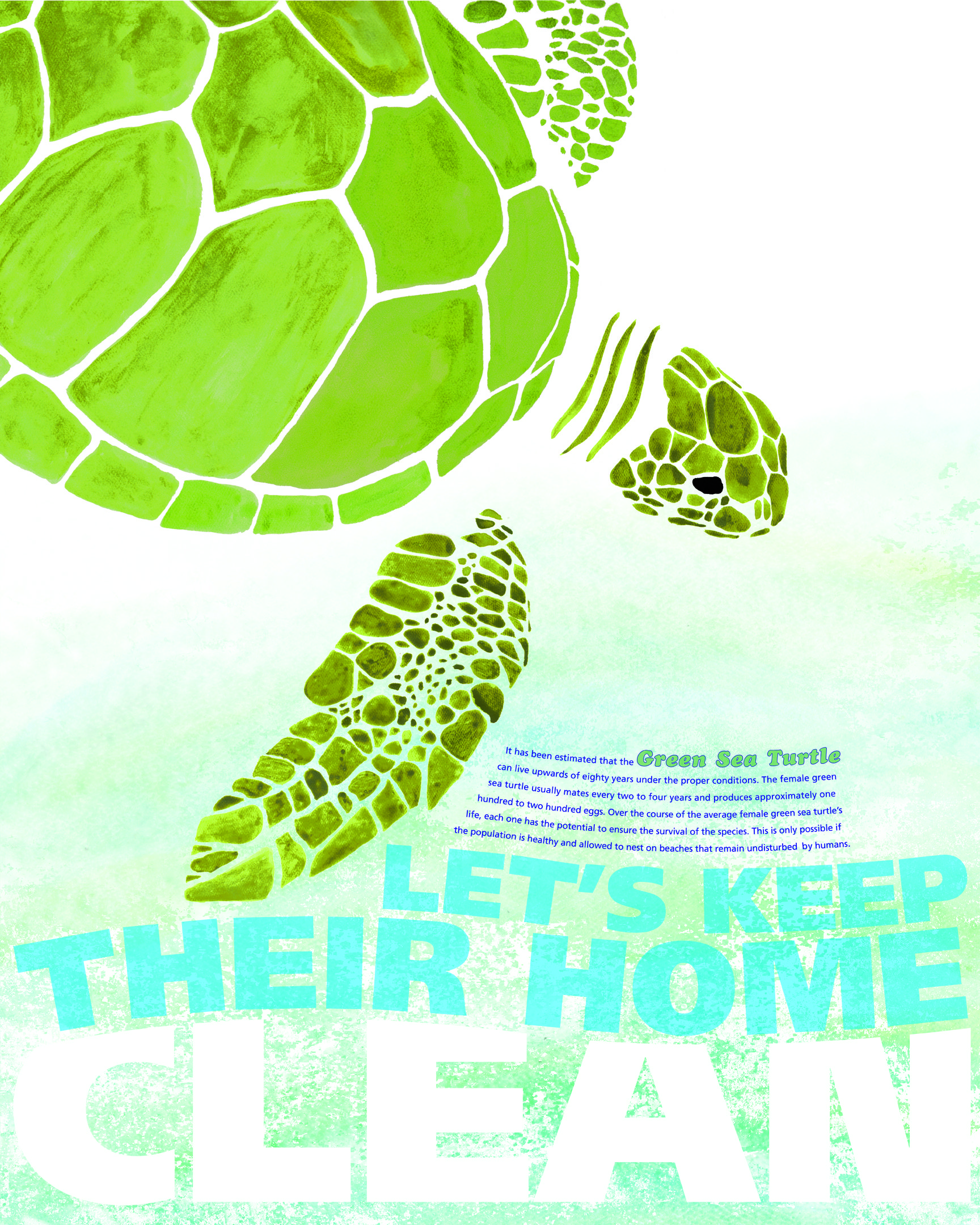 Texas Sea Turtle Daniel Carter Graphic design programs