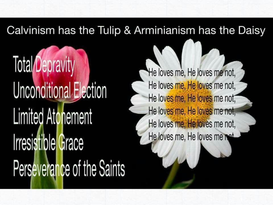 Calvinism Vs Arminianism Tulip Vs Daisy Christian Jokes Christian Humor Calvinism