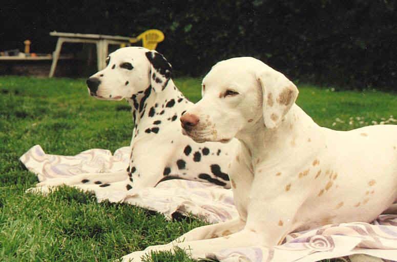 Fargeendinger Pa En Rase Yay Or Nay Avl Og Oppdrett Valper Sote Hunder Sote Dyr