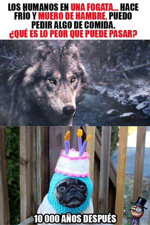 Pobres Lobos Pobre Perro Chistes De Perros Memes De Frio