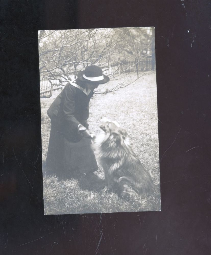 1915 Grace Connor and dog photo postcard,?collie or golden retriever or aussie