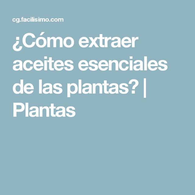 ¿Cómo extraer aceites esenciales de las plantas? | Plantas