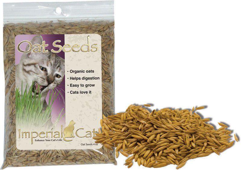 how to grow oats uk