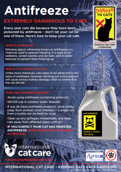Keeping cats safe antifreeze poisoning in cats