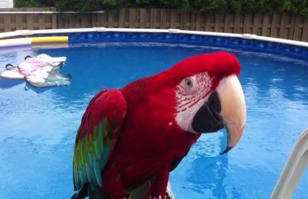 Jackson the Parrot dances to 'Billie Jean' - Rumble