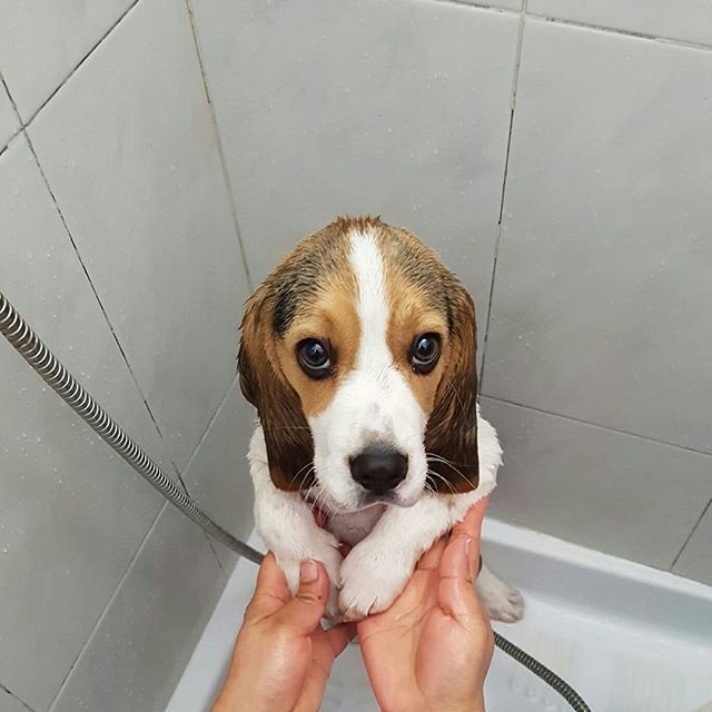 20 Incredibly Adorable Photos Of Puppies First Baths Puppies