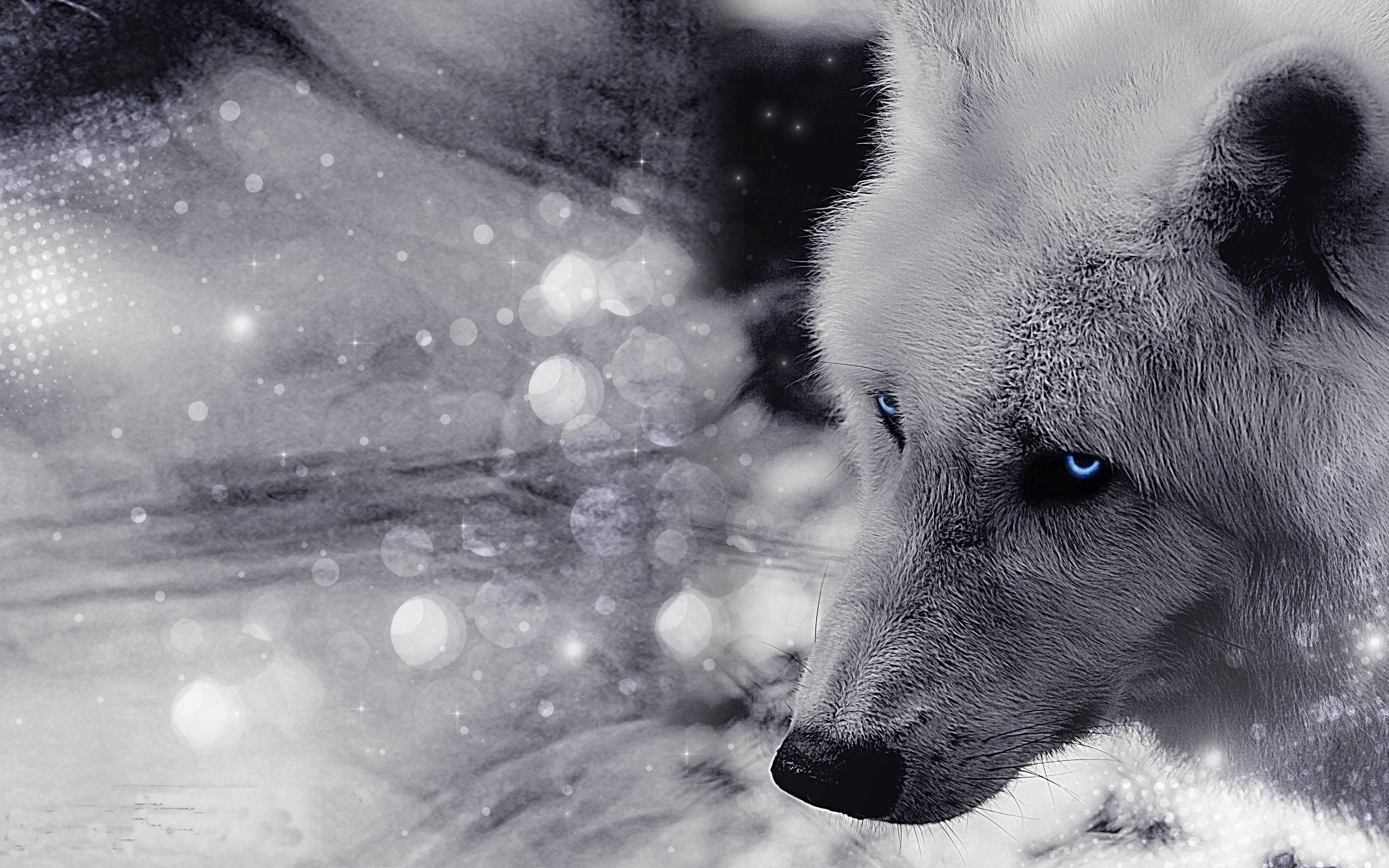 Best Images About Iphone Wallpapers On Pinterest Beautiful Wolf Wallpaper Pet Wolf Wolf Photos