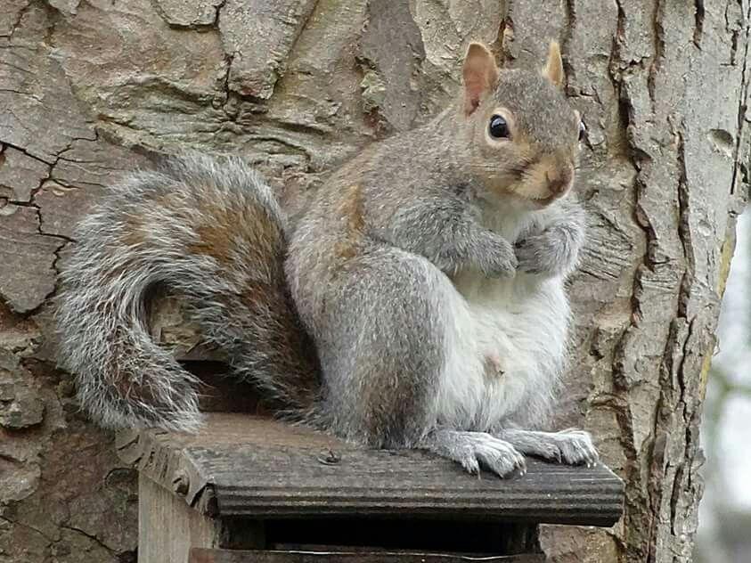 Squirrel !!!....