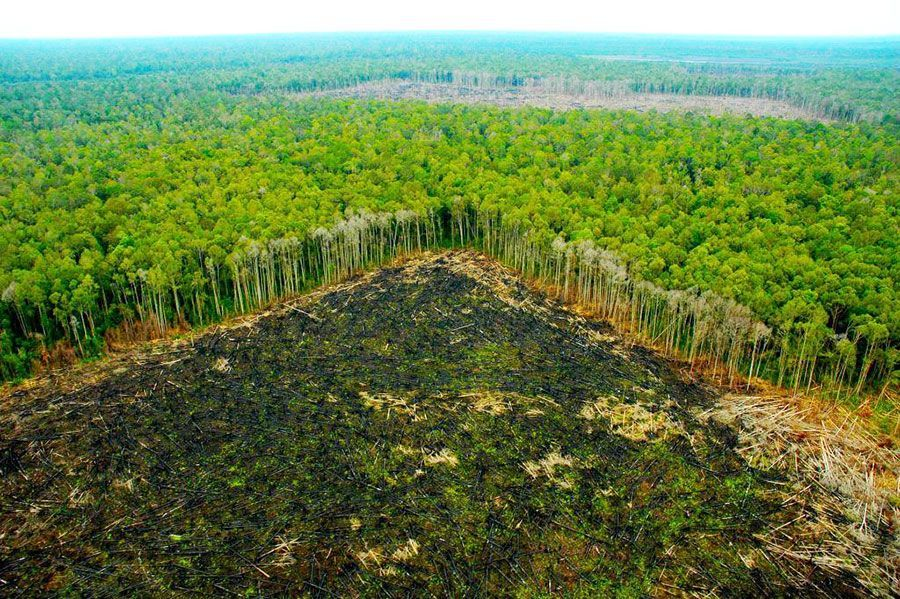 Deforestation In The Amazon Rainforest Reaches Highest Level In A