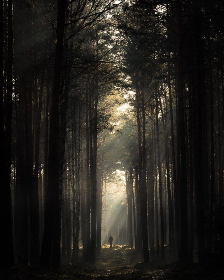 Photographer Jakub Wencek Explores The Forests Of Poland To Capture Fantastic Photos Of The Dark Side Of Nature