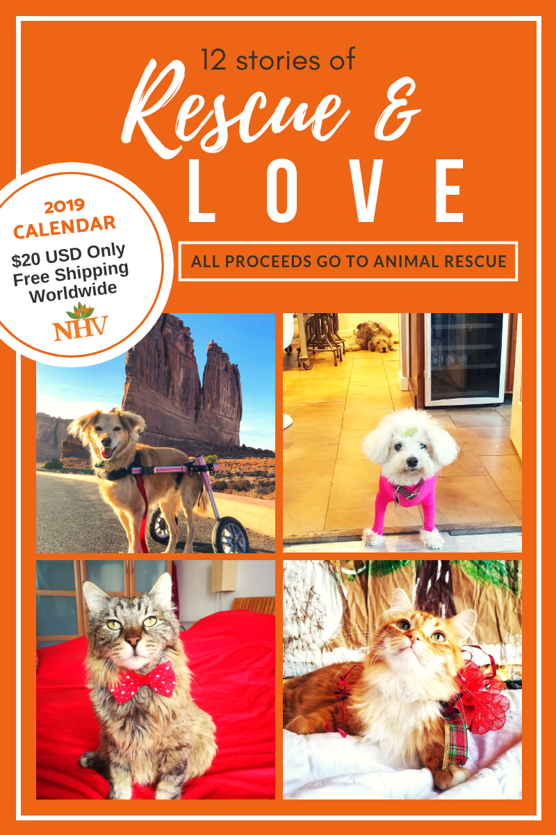 All sale proceeds go to NYC Second Chance Animal Rescue