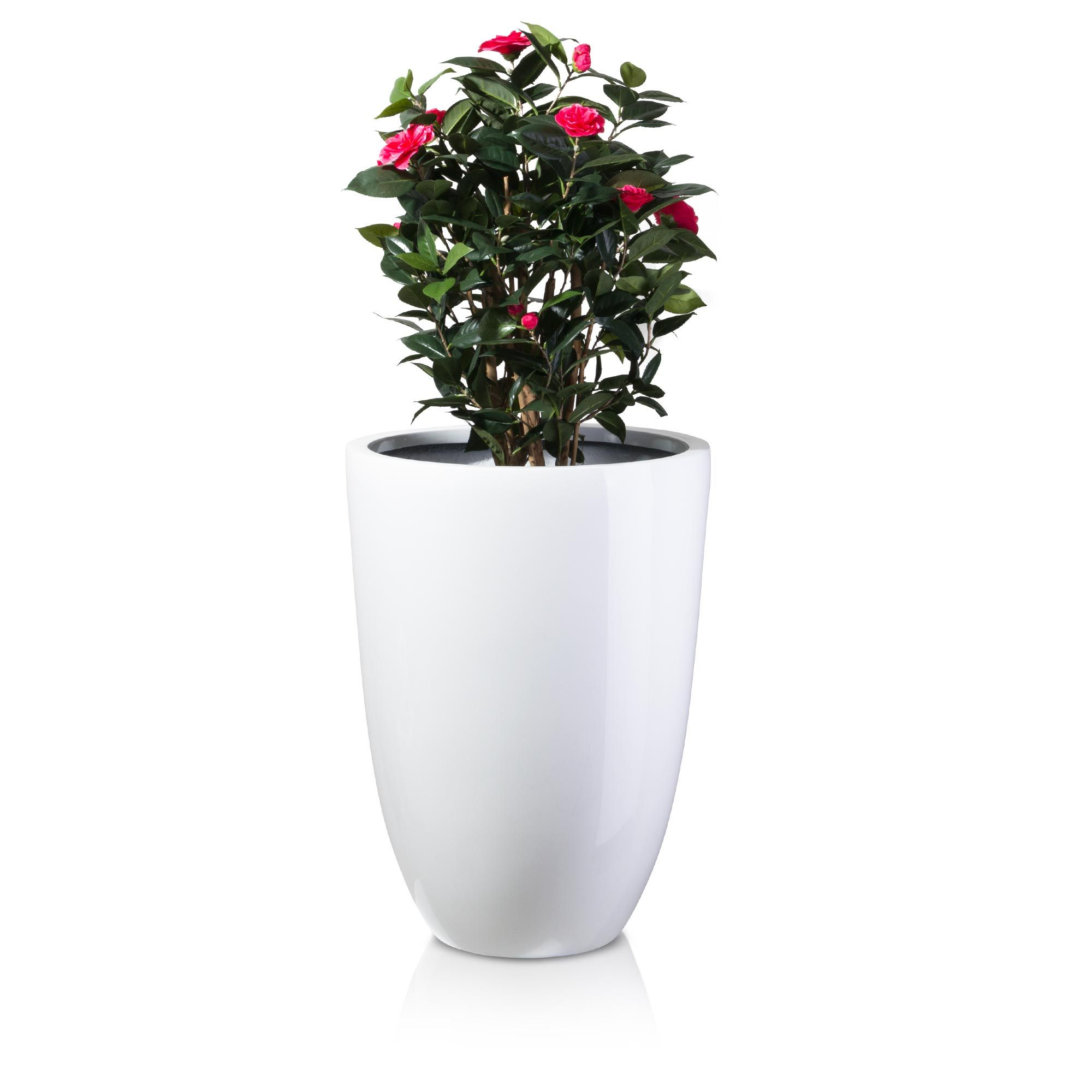 pflanzkübel leno 75 fiberglas weiß hochglanz | pflanzkübel fiberglas