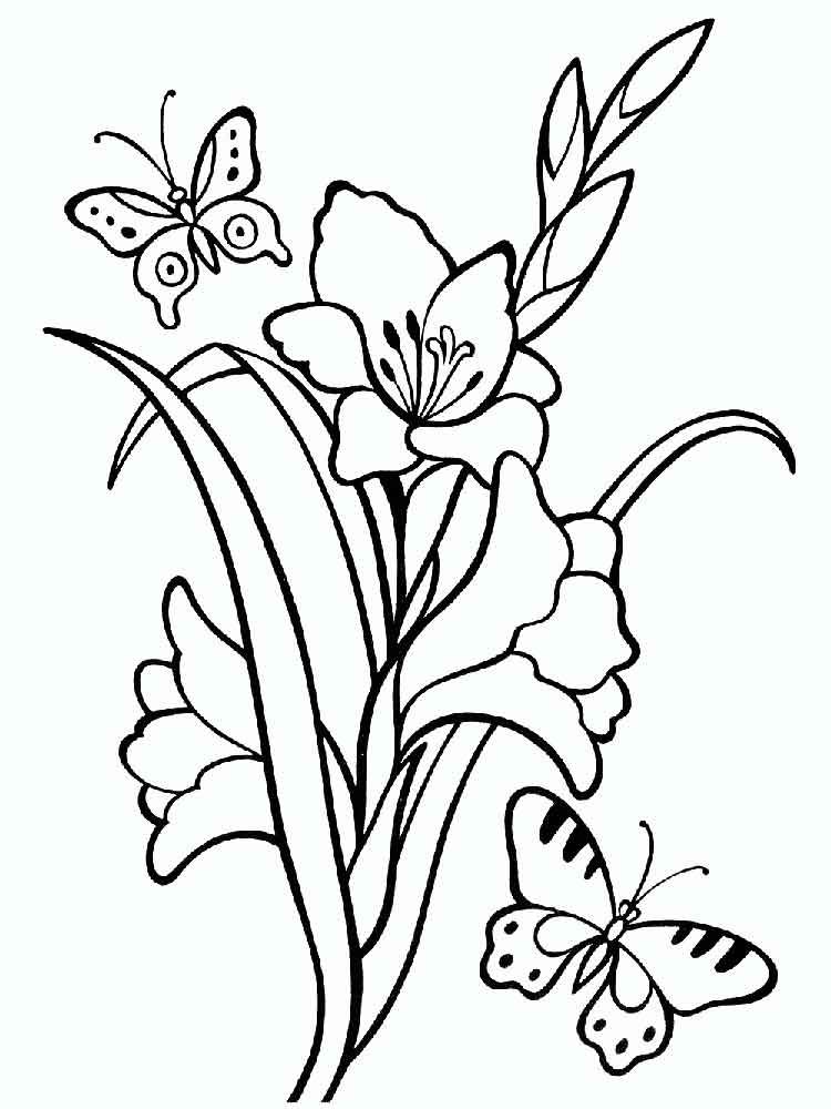 Gladiolus Coloring Pages Download And Print