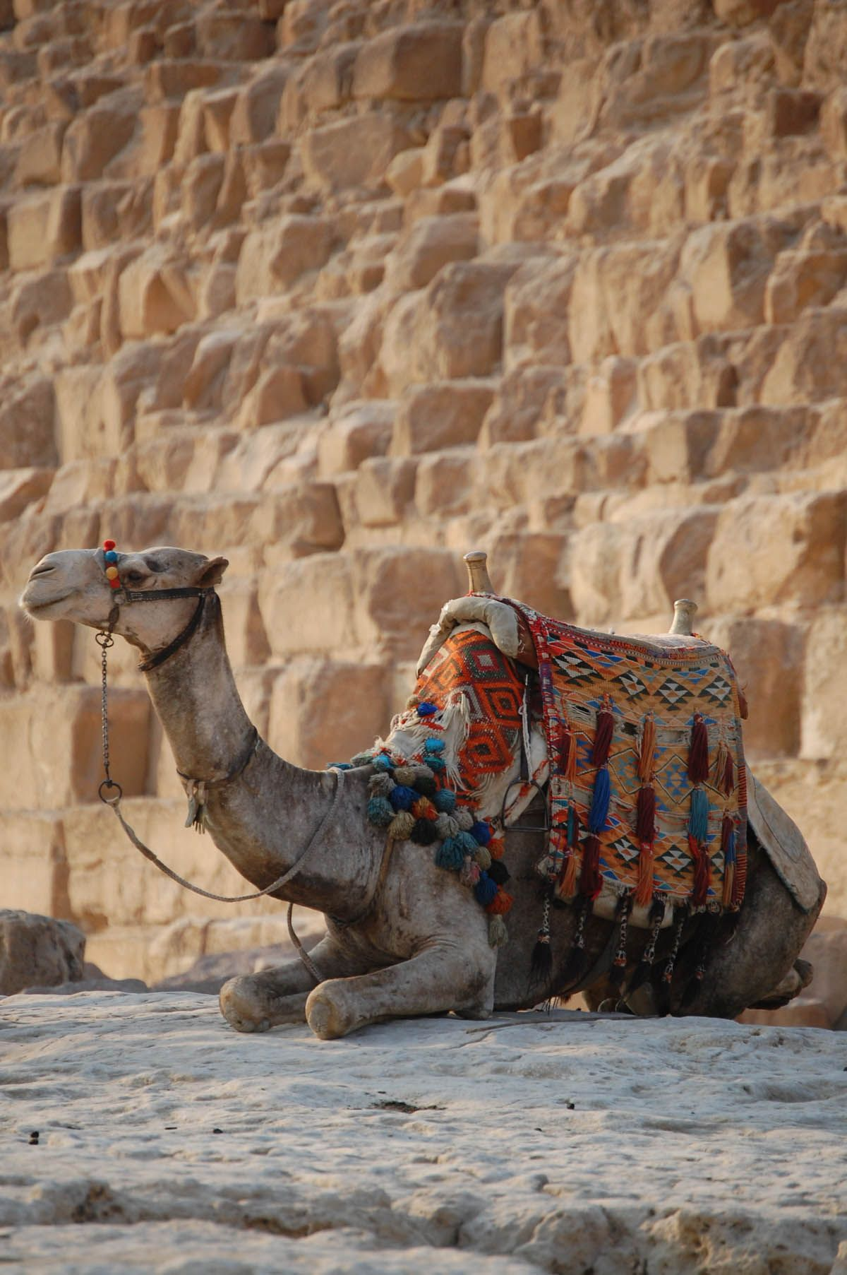 Pin On Camel Love