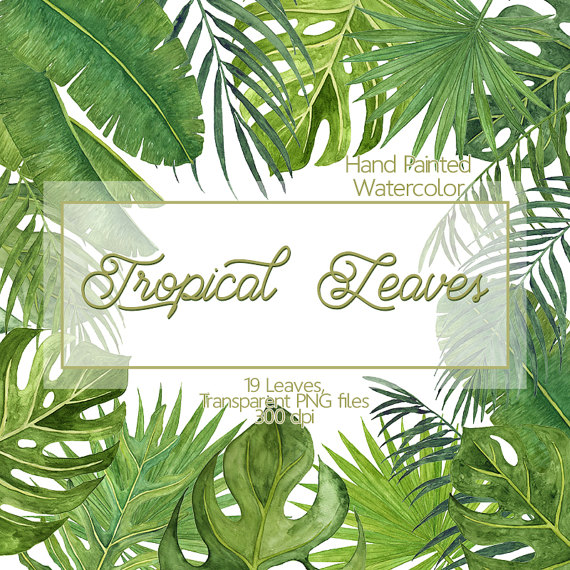 Tropical Leaves Watercolor Leaves Clip Art Monstera Leaves