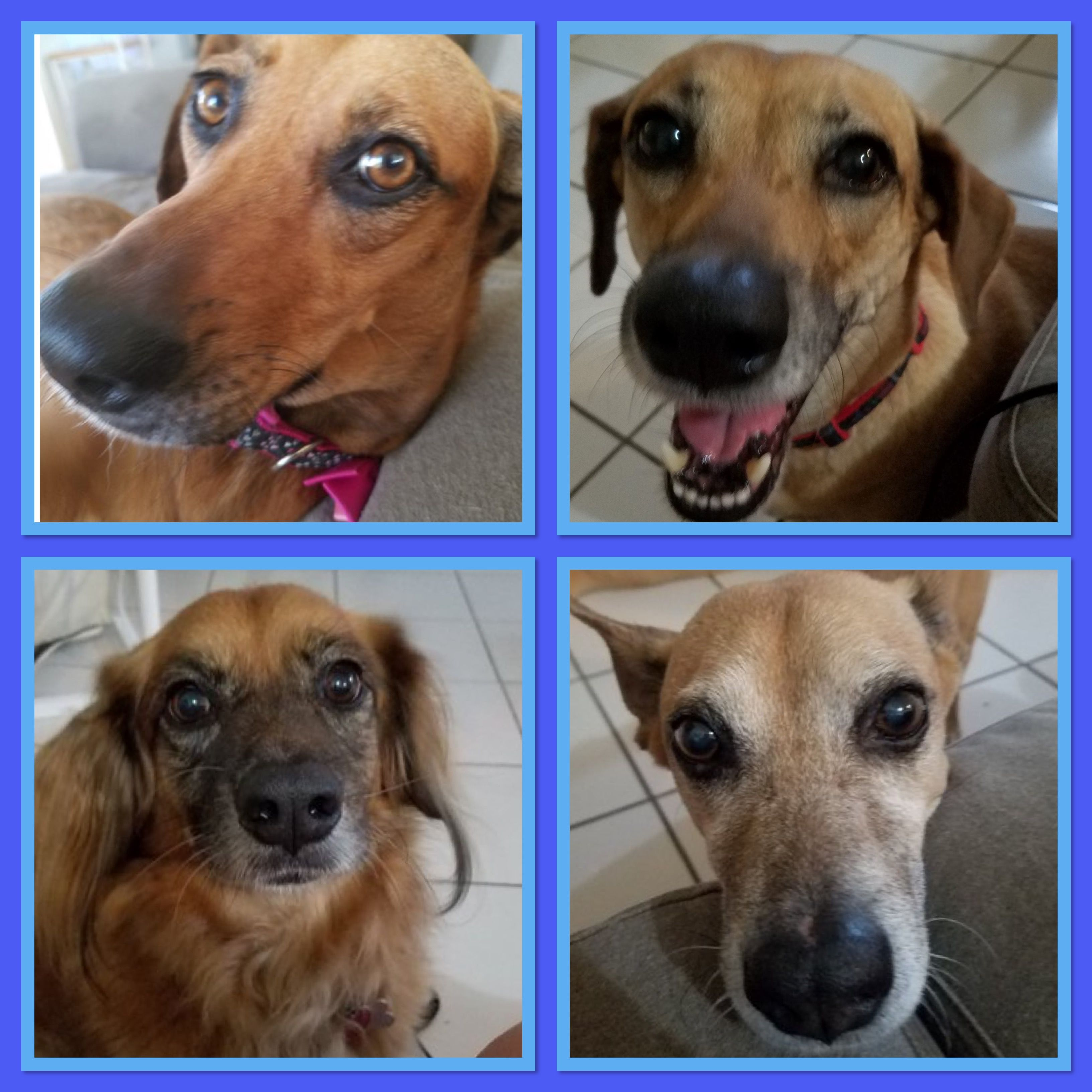 Four Rescues Now Reside With Twitter Sensation, Miss Iris