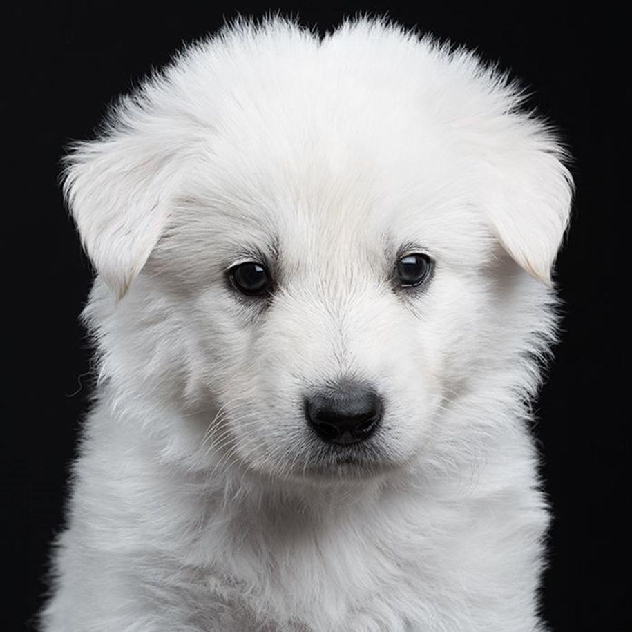 картинки с белыми щенками поздравительная