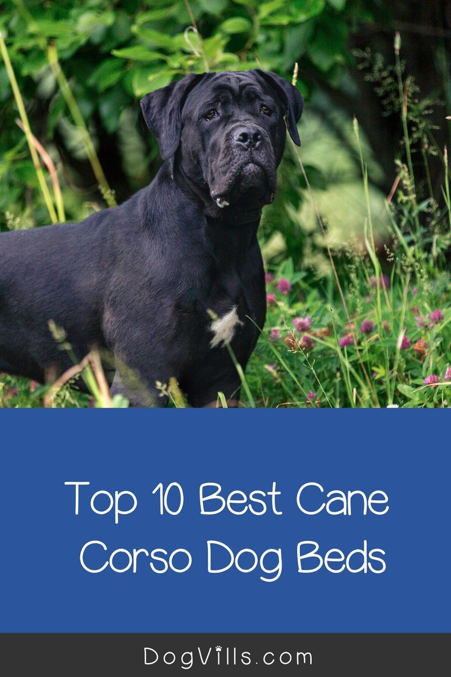 Top 10 Best Dog Beds for a Cane Corso Cool dog beds