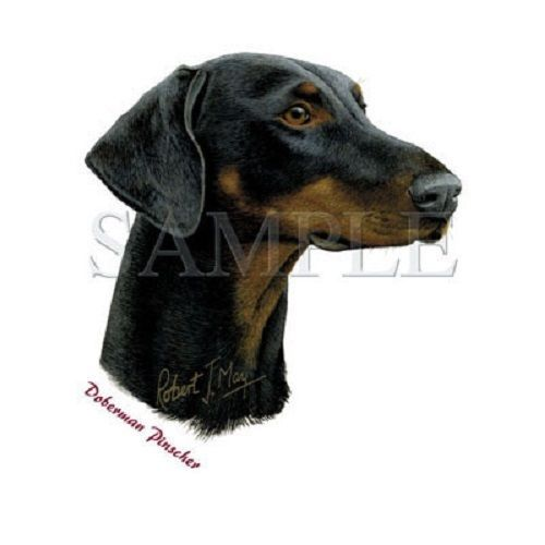 Doberman Pinscher Dog HEAT PRESS TRANSFER for T Shirt Sweatshirt Tote Fabric 840 #AB