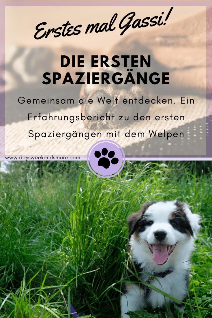 Pin Von Nicole Kullmann Auf Dog In 2020 Mit Bildern Welpen Hunde Welpen Erziehung Hundewelpen