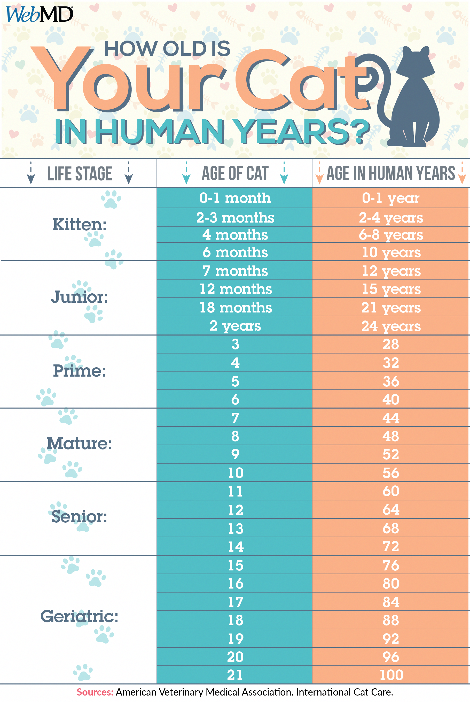 How Old Is Your Cat In Human Years Use This Chart To Calculate Your Feline S Age Catfacts Fun Facts About Cats Cat Ages Cat Years