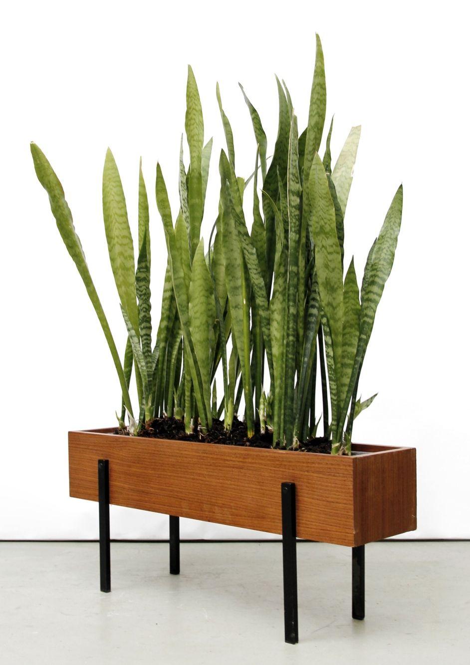 Teak And Enameled Metal Planter C1960 Plantas De Interior Decoracion Plantas Macetas Para Interiores