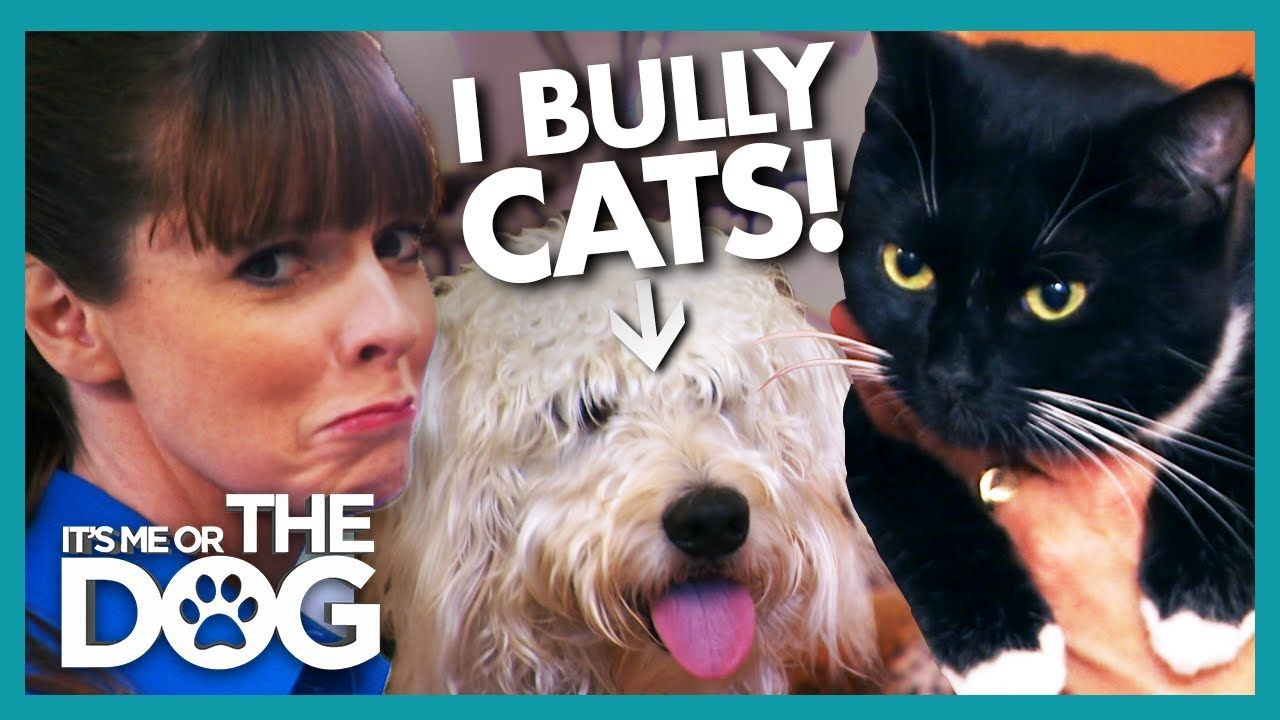 Victoria Stunned As Dog Bullies Owner And Her Cat It S Me Or The