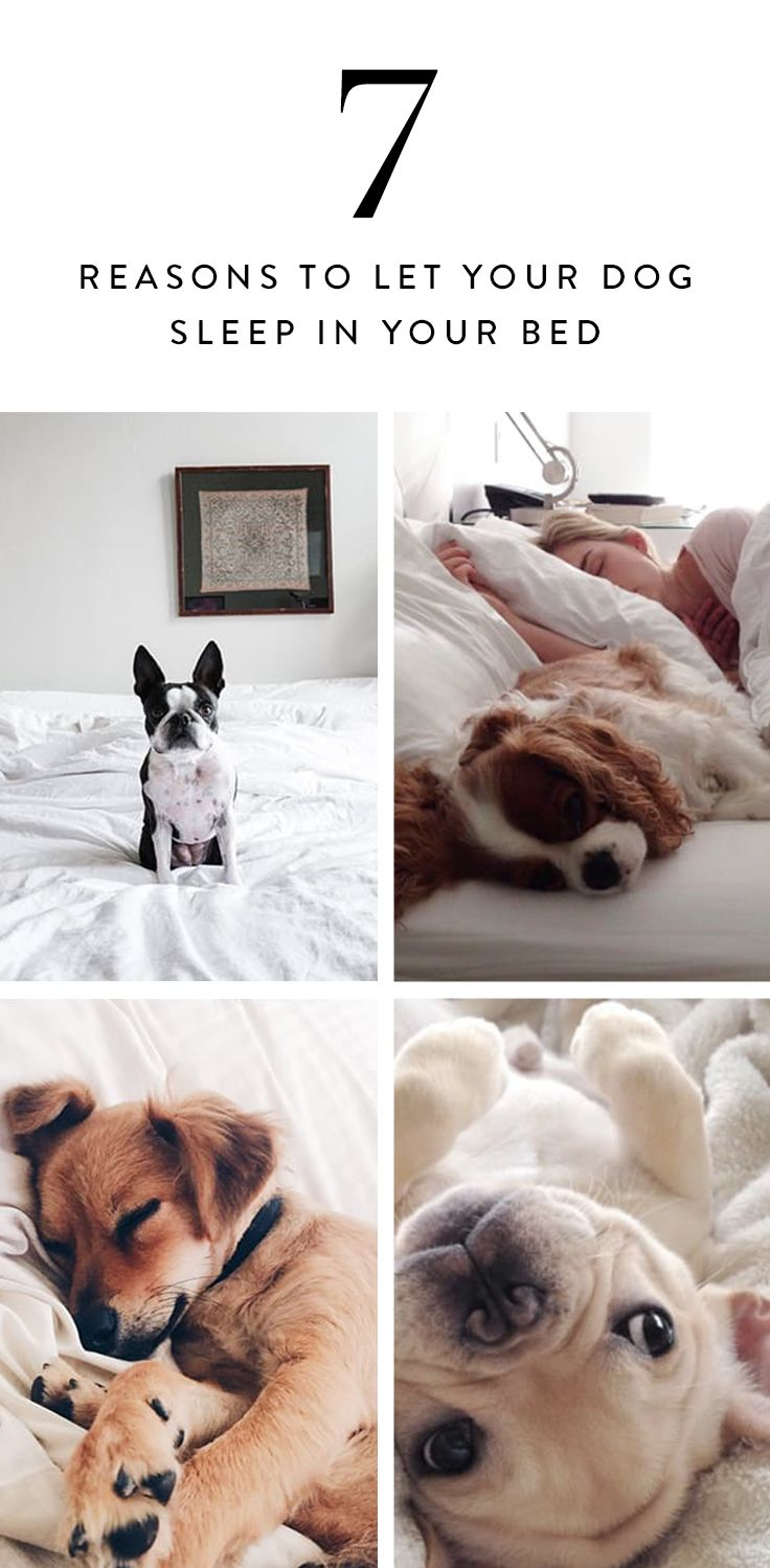 7 Reasons It S Actually Better To Let Your Dog Sleep In Your Bed