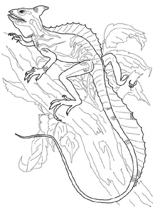 Basilisk Lizard Coloring Pages New Coloring Pages Coloring Pages Animal Coloring Pages Basilisk Lizard