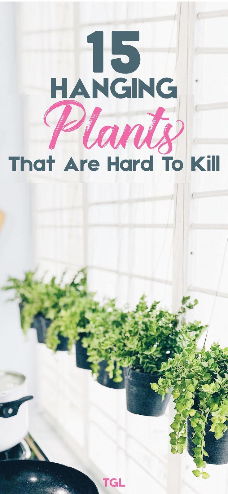 Hanging Plant Ideas | Indoor Plants Low light | Indoor Plants Clean Air | Indoor Plants For Home Decor | The Gorgeous List | #hangingplantsindoor
