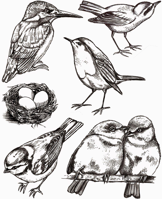 Vogel linksonder vind ik leuk