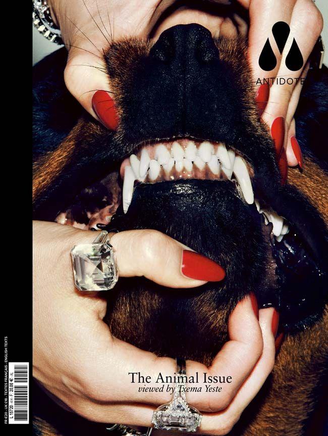 COVERS_ANTIDOTE_ANIMAL11