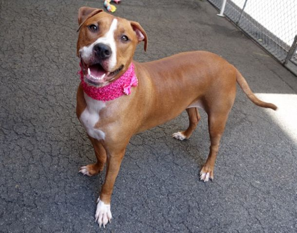 ANNIE-  A1046105 SUPER URGENT!$150 DONATION TO THE NEW HOPE RESCUE THAT PULLS HER!  TO BE DESTROYED TONIGHT 8/10/15 OR TOMORROW, BUT THERE STILL IS TIME TO SAVE ANNIE'S LIFE! PLEASE DONT TURN AWAY, WE R ALL SHE HAS, THEY R GOING TO KILL HER N WE R HER ONLY VOICE N HOPE FOR SURVIVAL! SHE DESERVES LOVE, LIFE N A FOREVER HOME! WE CAN CHOOSE LIFE, NOT DEATH FOR ANNIE! PLEASE HAVE COMPASSION FOR ANNIE'S LIFE!  PUBLICLY ADOPTABLE!
