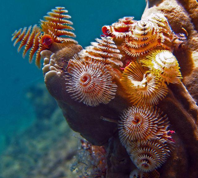 5 Cool Types Of Marine Worms Animals Ocean Creatures Pet Birds
