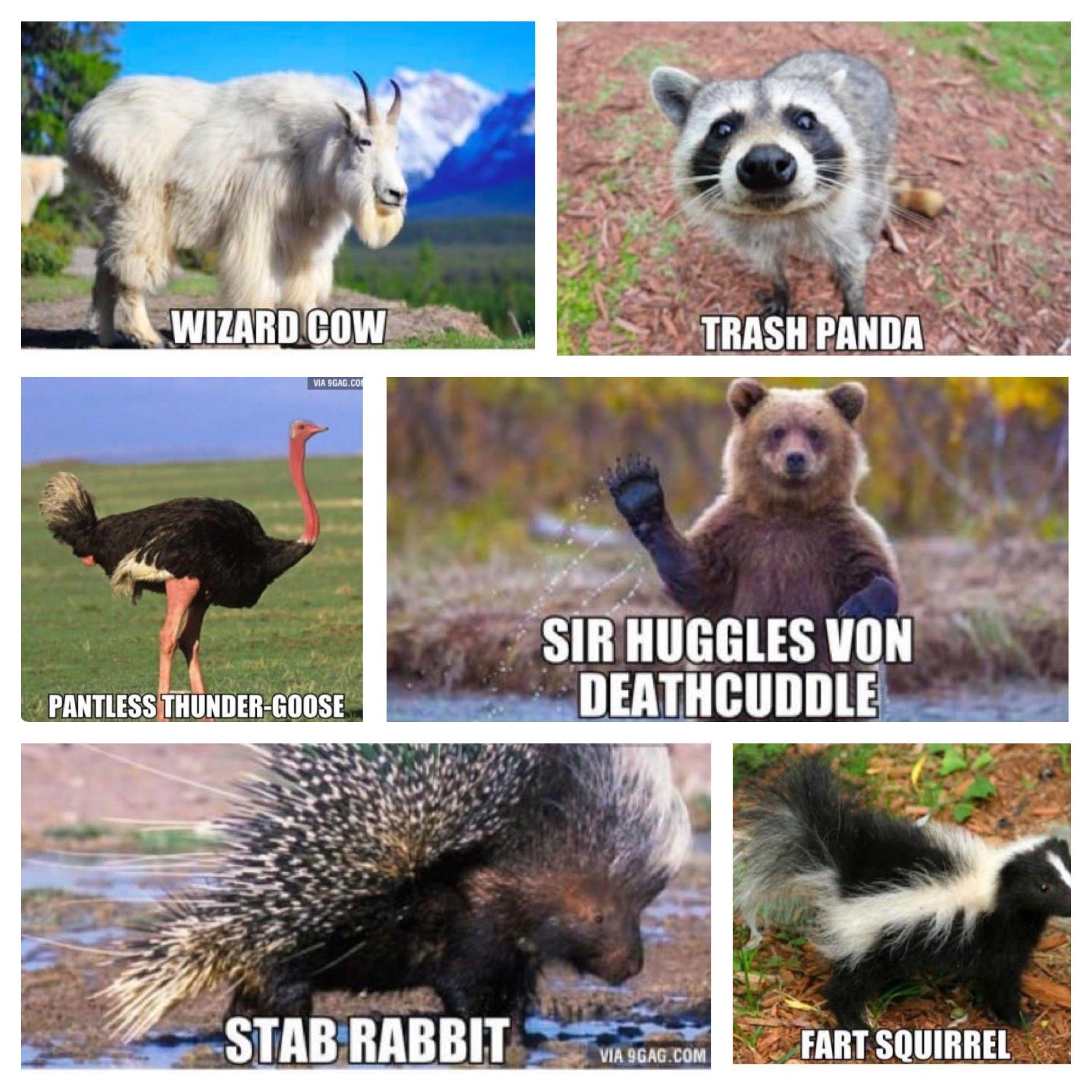 Pantless Thunder Goose Pfft Funny Animal Names Funny Animal