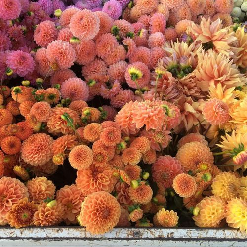 Untitled beautiful flowers love pretty tumblr ff color untitled beautiful flowers love pretty tumblr ff color mightylinksfo