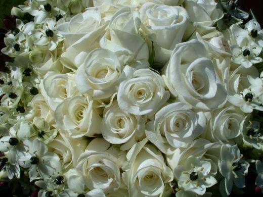 Rosas Blancas Wallpapers Imagui Irene Rosas Blancas Rosas Y