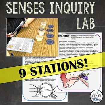 Five Senses Lesson Inquiry Lab Activity - Senses Stations for High School | Anatomy. physiology. High school activities. Lab
