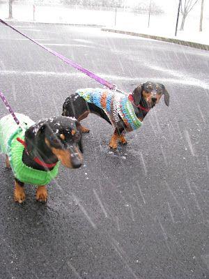 Winter Wiener Dogs Wish G Would Wear Clothes Taksa